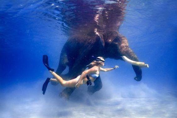 Swim With Elephants