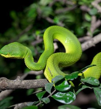 snake park in India