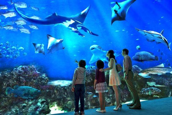 Go To Aquarium Here