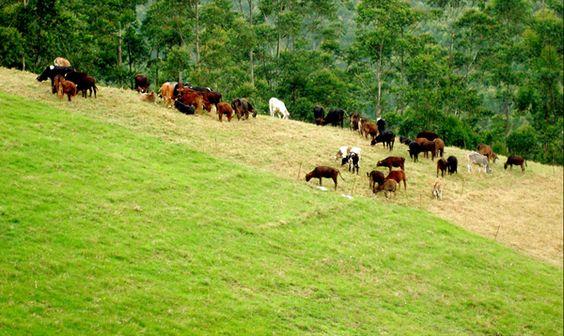 Indo Swiss Dairy Farm