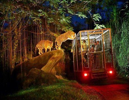 Night Safari Tours & Activities