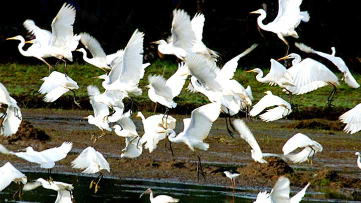 Salim Ali Bird Sanctuary Munnar