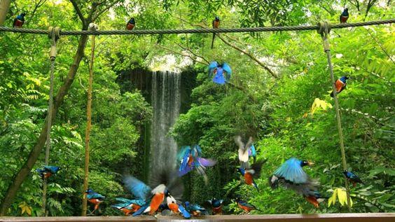 Visit The Jurong Bird Park