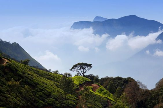 best time to visit Munnar