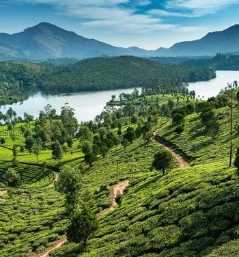 the best time to visit Munnar