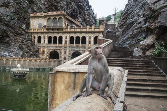 Galtaji Temple (Monkey Temple)