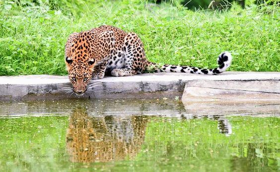 Jhalana Leopard Conservation Reserve